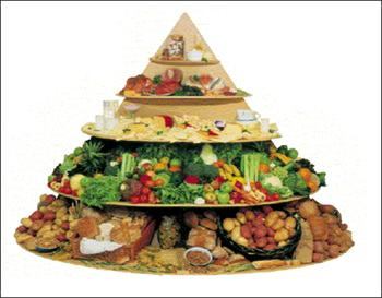 تغذیه و لاغری